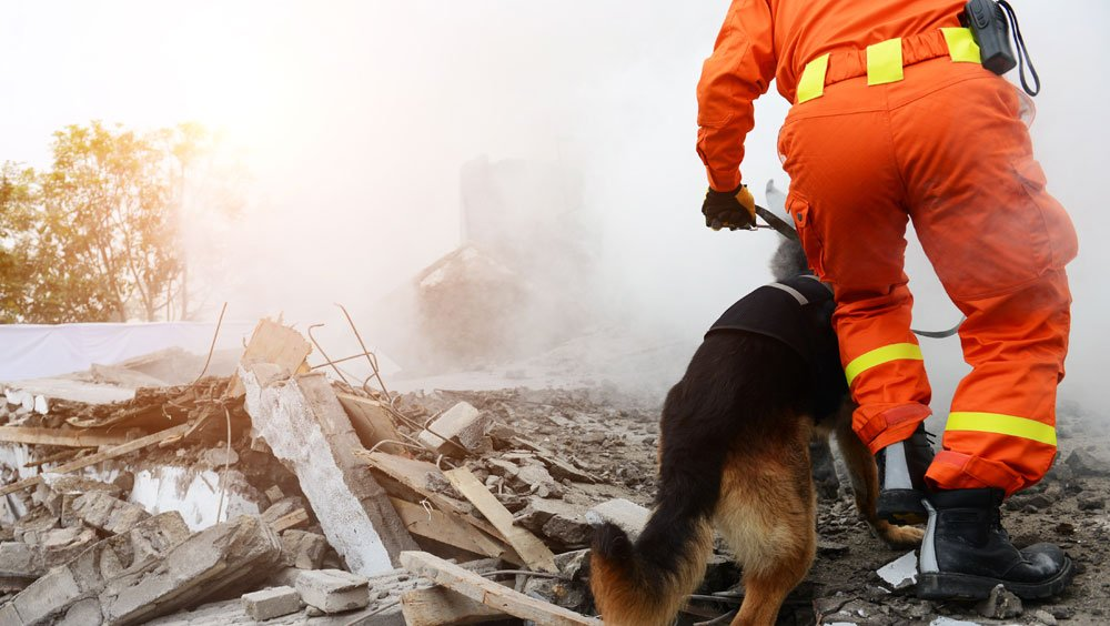 Worker with dog after earthquake